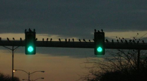 birds on a light