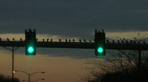 birds on a light