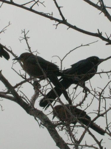 birds tweetinz