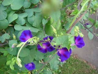 bloominpic