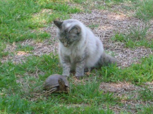cat n turtle