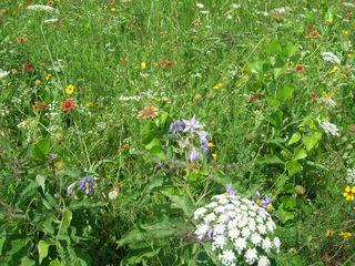 wild flowerage