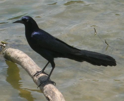 iconic birdy