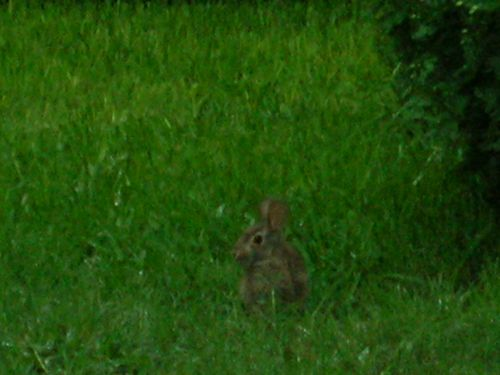 rabbit zoom shot
