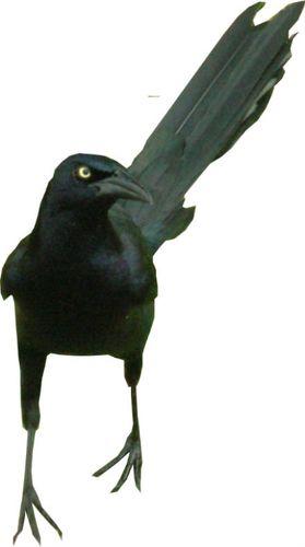 Squakaloc
