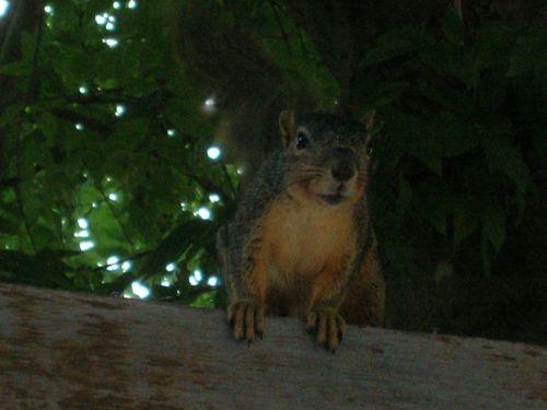 squirrel zoomage