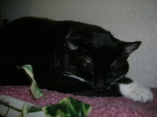 Bootcat slumbering