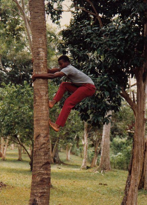 Tropical fruit picker